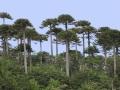 Parque Nacional Villarrica 3.jpg